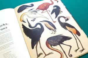 animalium storks